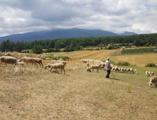 Nachhaltige Geldanlage – Social Impact Investment am Beispiel Kosovo